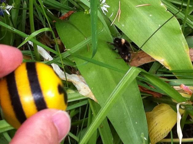 Bee-meets-Irish-bee