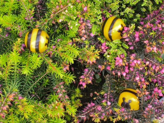 Bees-in-heather