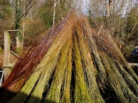 Willow varieties are different colours. The rods are let dry then soaked for several days before use - they can't be woven dry.