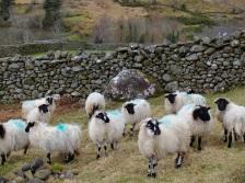 Intermission for some Connemara scenery...