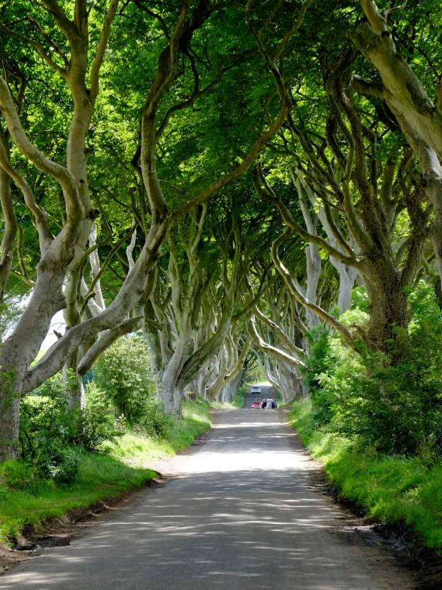 The atmospheric Dark Hedges, scene of Arya Stark's escape along the Kingsroad. The avenue of beech trees was planted in the 18th century