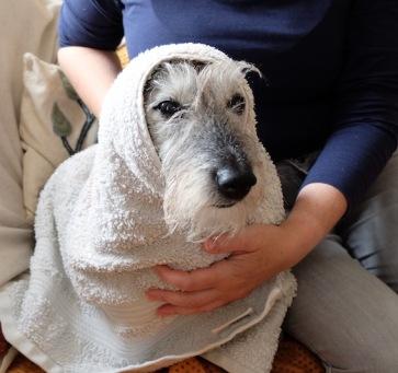 Ellie tries the Galway shawl look
