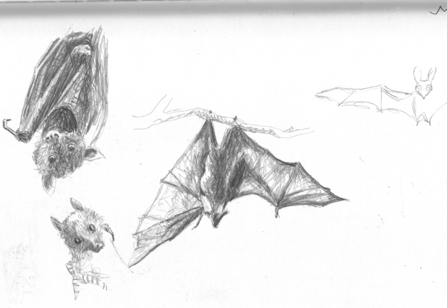 batssketch1
